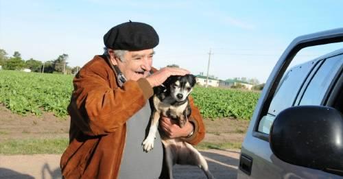 Manuela la perrita de Pepe Mujica que nos dio a todos una lección de humildad