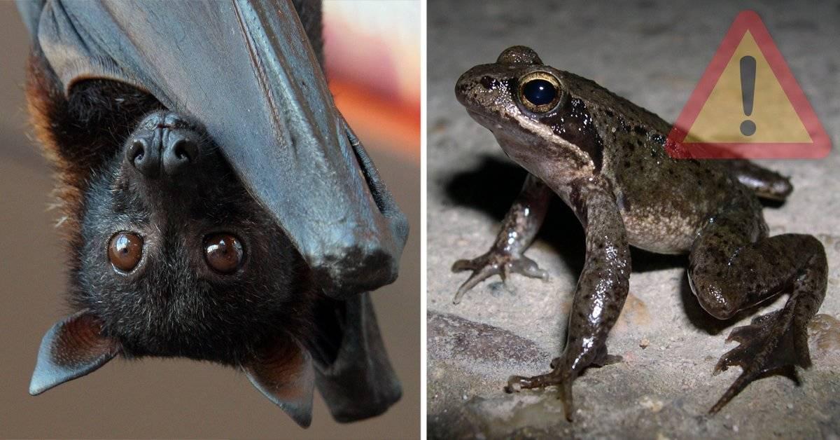 9 animales que quizás en un año ya no existan
