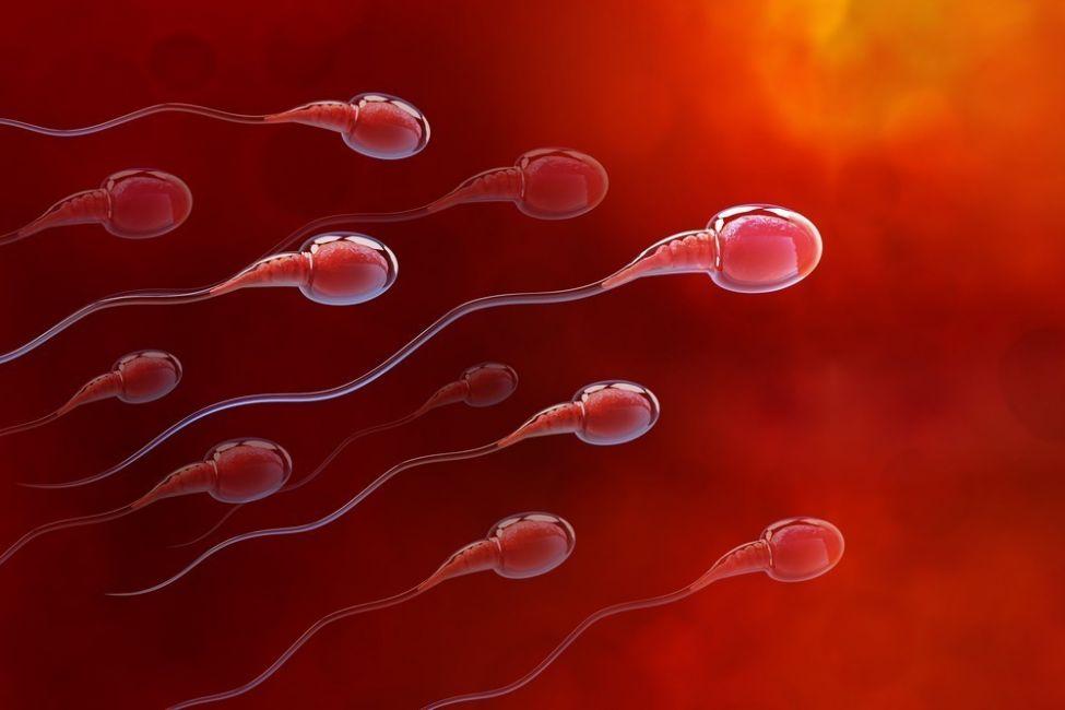 los óvulos seleccionan a los espermatozoides
