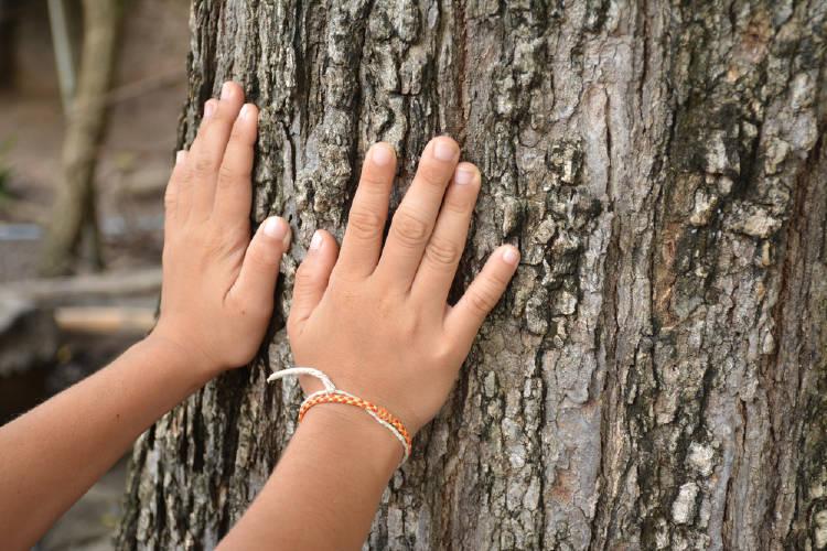 manos arbol