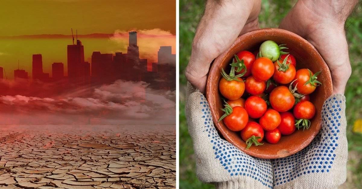 ¿Por qué el cambio climático está haciendo que nos quedemos sin comida?