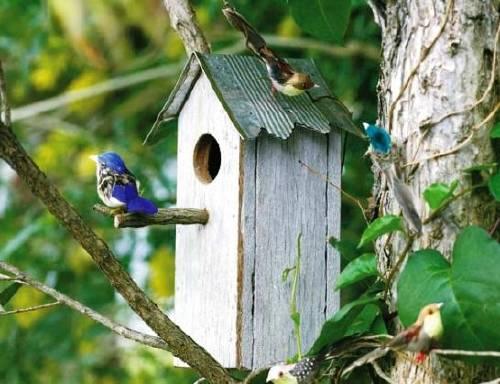 Cómo construir una casa nido de pájaros