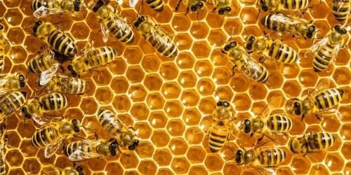 Estas abejas construyen las colmenas más extrañas del mundo y nadie sabe por..