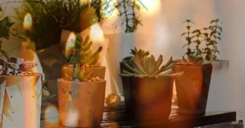 7 plantas protectoras del hogar y cómo deberías usarlas