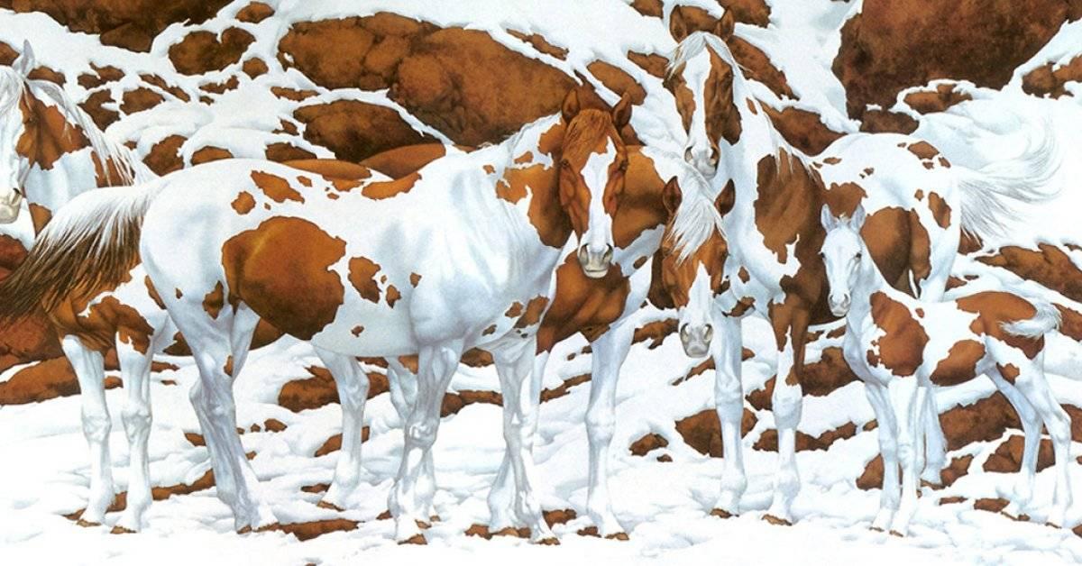 Este es el invisible y hermoso vínculo entre los caballos y los humanos