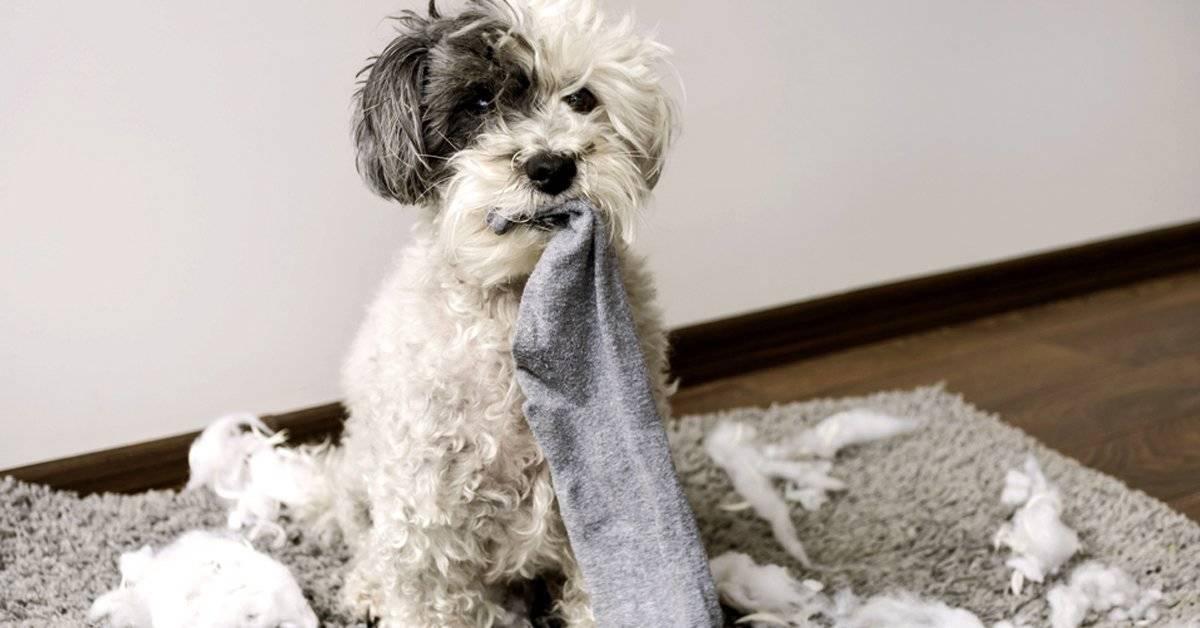 6 tips para entrenar a tu perro desde cachorro
