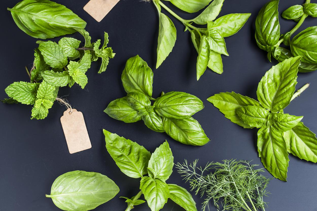 Conoce las 5 plantas que pueden mejorar tu calidad de vida