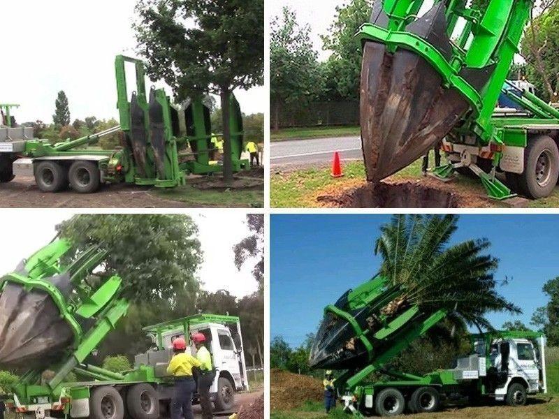 Espectacular método para trasplantar árboles sin que se dañen