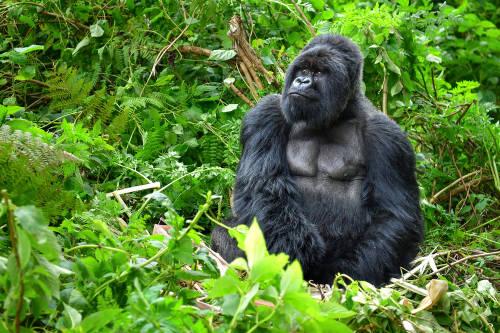 Advierten un aumento de la caza furtiva en el Parque Nacional Virunga