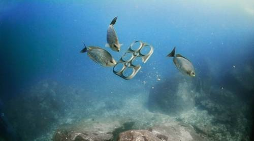 Una compañía creó un empaque biodegradable que puede ser consumido por los ..