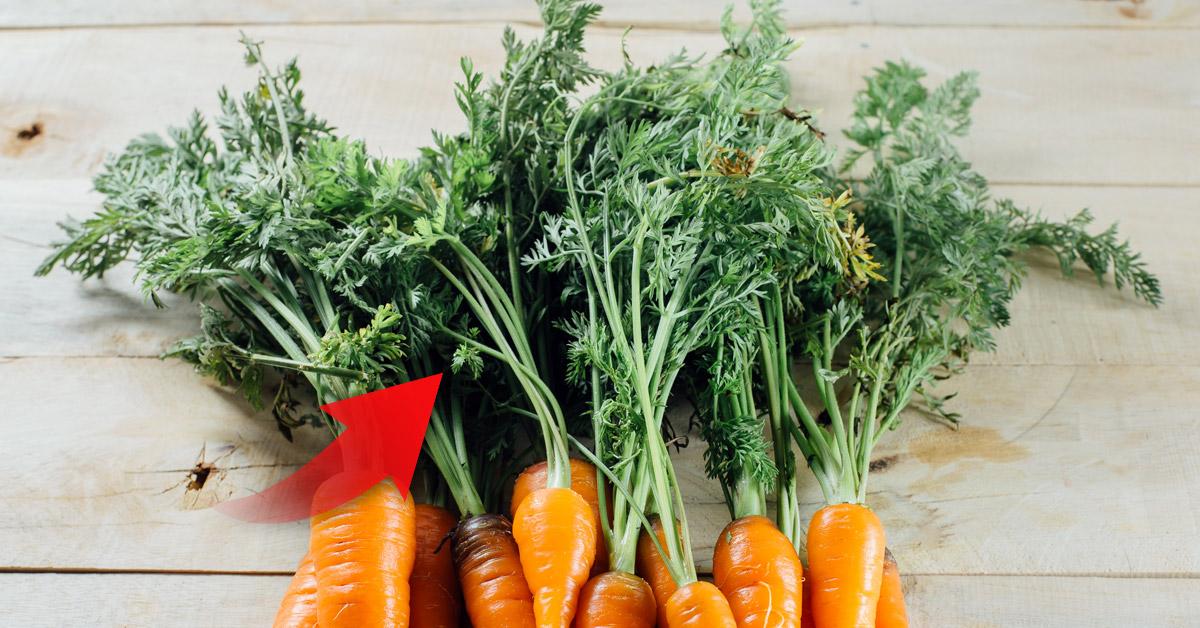 8 Ideas Para Usar Las Hojas De Zanahoria En Vez De Desecharlas Bioguia Subespecie sativus, la zanahoria, pertenece a la familia de las umbelíferas, también denominadas apiáceas. ideas para usar las hojas de zanahoria