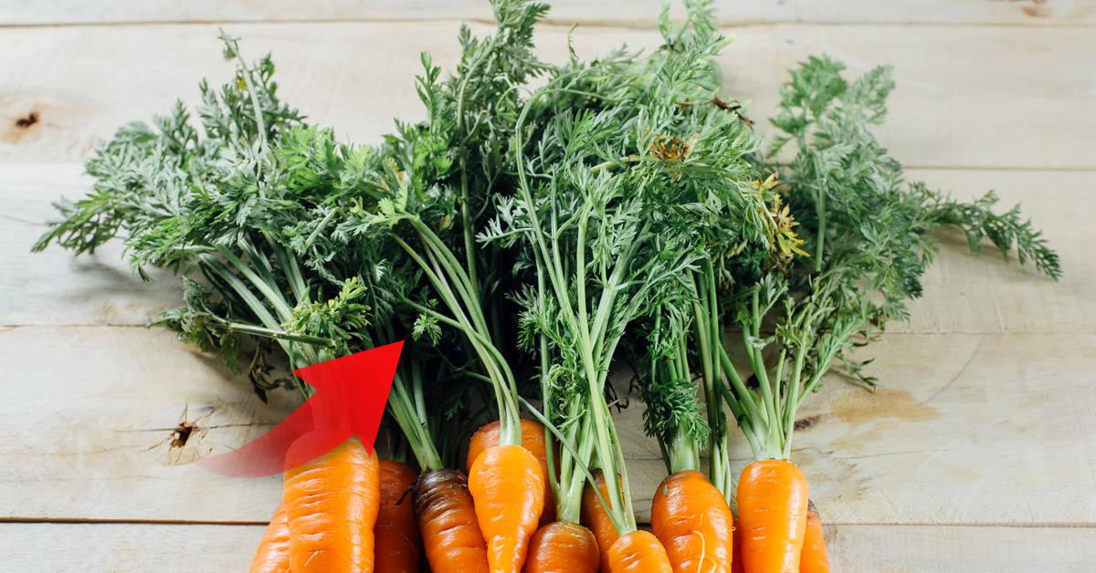 8 ideas para usar las hojas de zanahoria, en vez de desecharlas