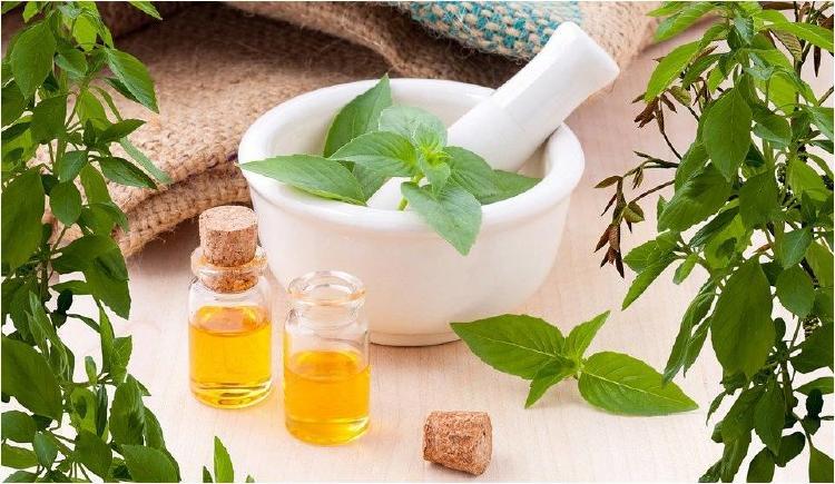 5 plantas medicinales que debes tener en tu casa
