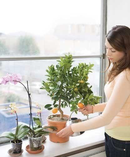 La capacidad de las plantas para mejorar la calidad del aire interior se reconoció en la década de 1980
