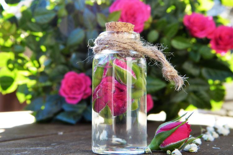 Las rosas de interior también florecen durante todo el año.