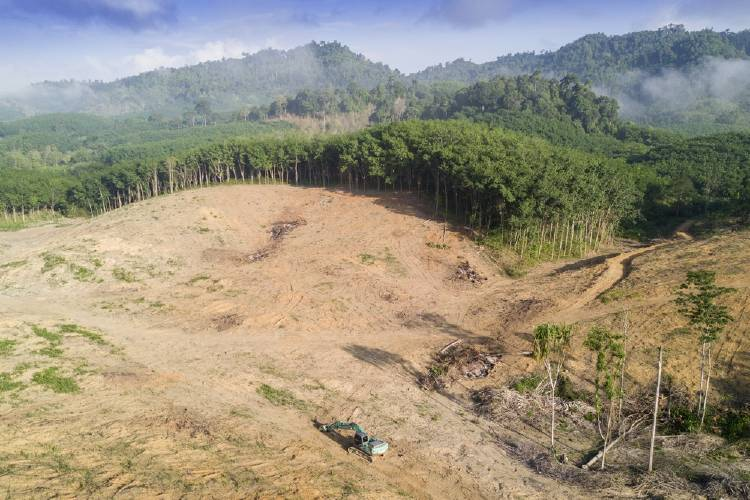 deforestacion_(3)