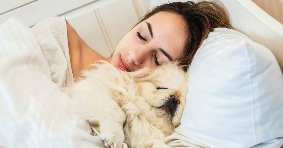 Las mujeres podrían dormir mejor al lado de sus perros que con su pareja