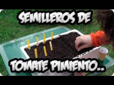 Cómo sembrar tomates, pimientos y berenjenas en tu huerto