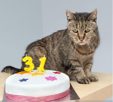 Récord gatuno: con 32 años él fue el gato más viejo del mundo