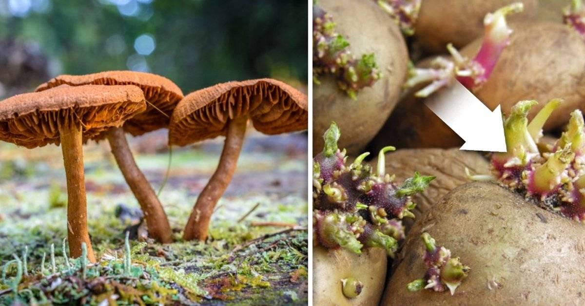 Los 6 alimentos más peligrosos del mundo que la gente realmente come