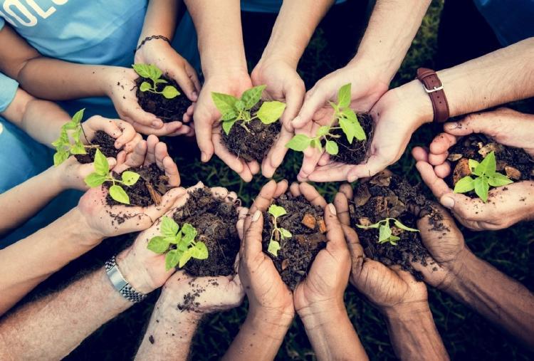 agricultura ecológica ecoforestación