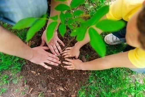 Cómo plantar mil árboles en un día