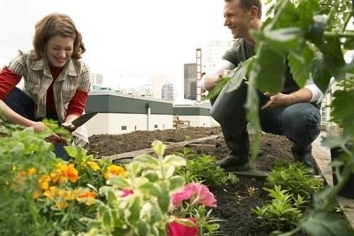 Todo lo que necesitas saber para cultivar vegetales en la azotea