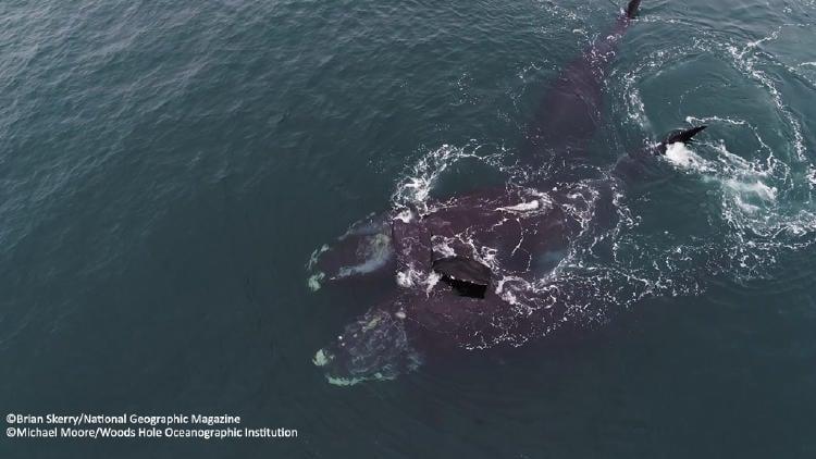 abrazo-de-ballenas
