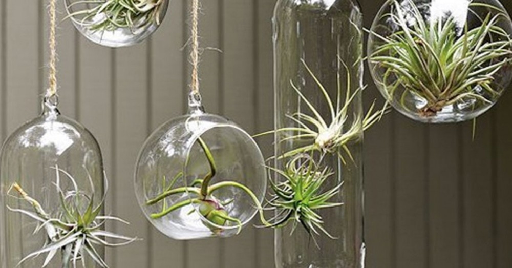 7 formas originales de decorar tu casa con plantas de aire for Ideas para decorar tu casa con plantas