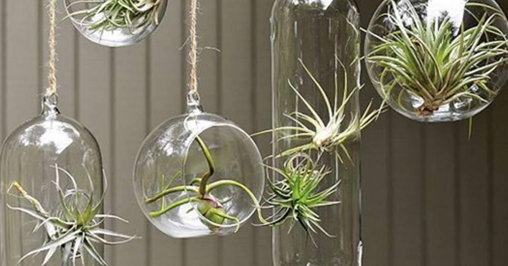 7 formas originales de decorar tu casa con plantas de aire