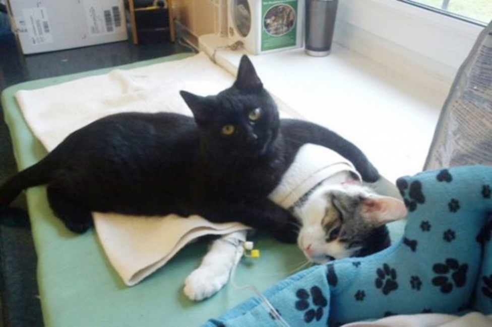 Radamenes gato enfermero - historia