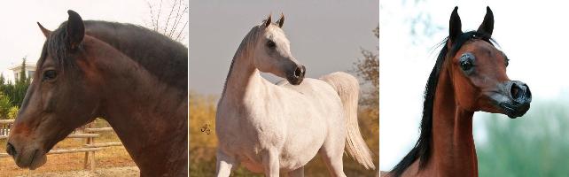 La crueldad no tiene fin: estos son los monstruosos caballos-caricatura que ti..