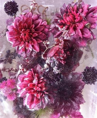 Admira estas hermosas imágenes creadas con flores congeladas