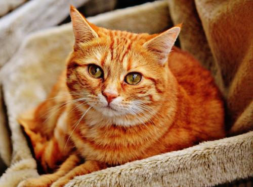 Confirmado: los gatos reconocen su nombre, pero se hacen los distraídos