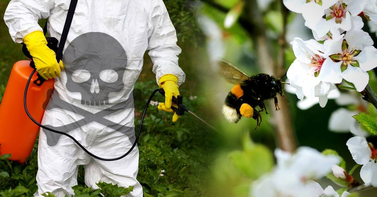 Esto le pasa a las abejas que entran en contacto con el glifosato