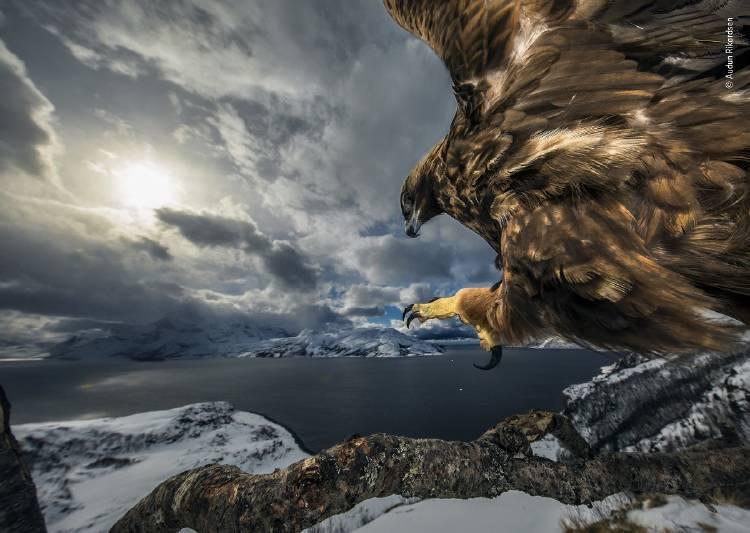 Audun Rikardsen - Wildlife Photographer of the Year