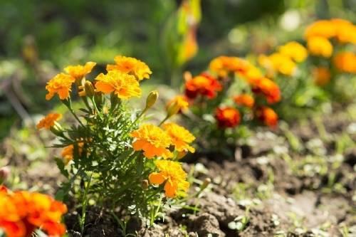 9 consejos para tener un jardín sustentable