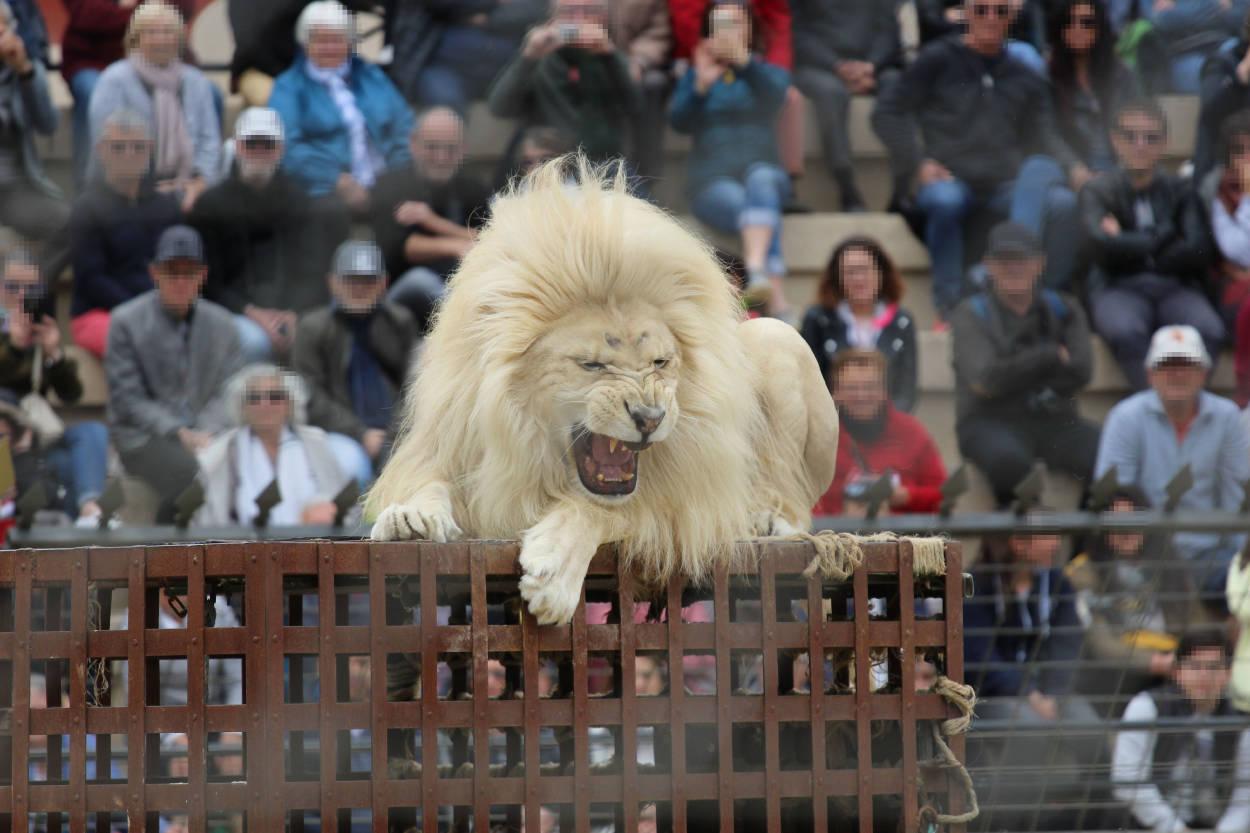 Una investigación da a conocer la crueldad animal en reconocidos zoológicos