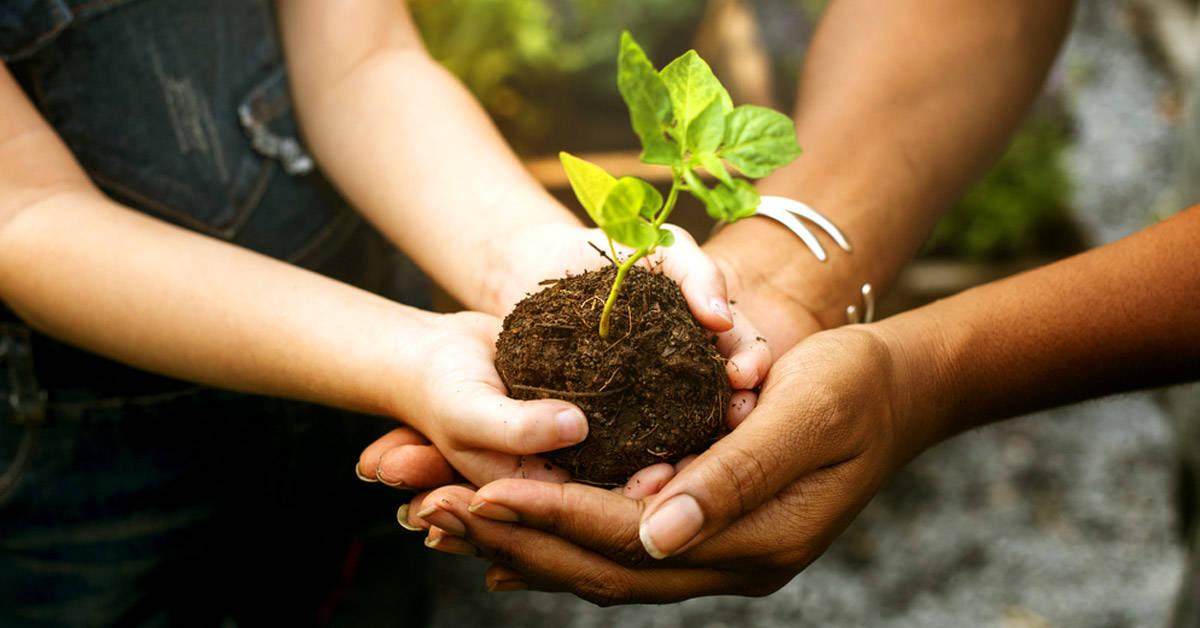 12 beneficios de plantar un árbol