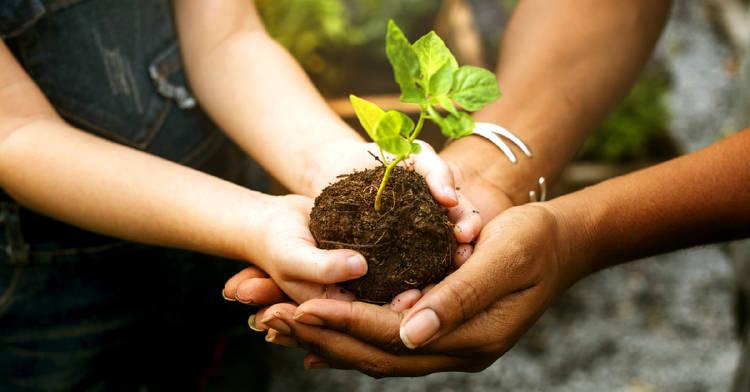 beneficios-plantar-arbol