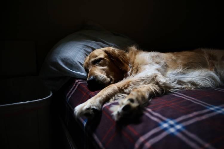 perro dormido cama