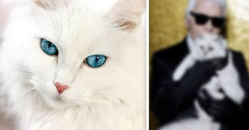 Conoce a Choupette, la gatita que tiene más dinero que cualquier persona que conozcas