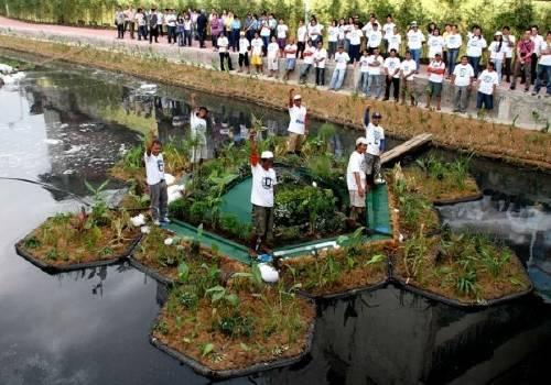Recuperan un río de manera ecológica y crean jardines flotantes