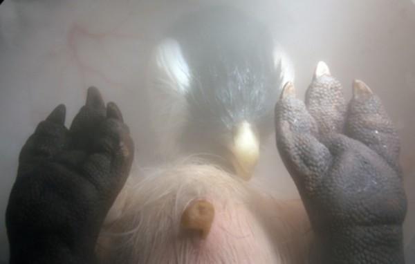 12128_3708_in_the_womb_extreme_animals-19_04700300_qfzh4jyeg47qazfc4e357d3al3ncurxrbvj6lwuht2ya6mzmafma_610x389-600x382