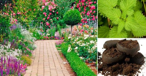 Cómo hacer fertilizantes naturales en casa