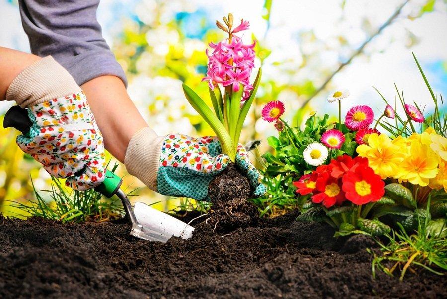 Piedra pómez para tus plantas: sus beneficios y usos en el jardín