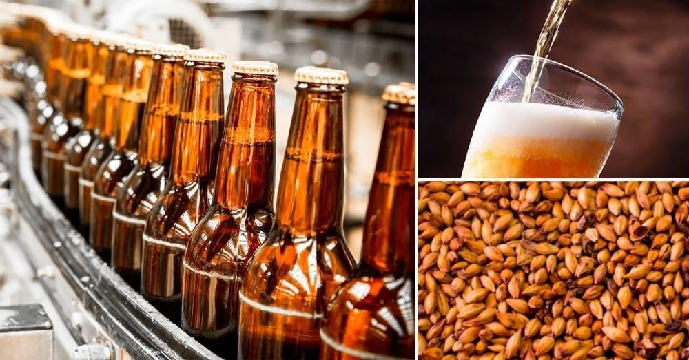 ¿Qué cerveza es más sustentable?