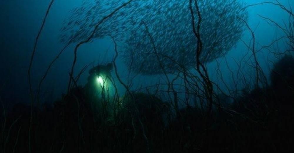 4 paisajes ocultos bajo el agua