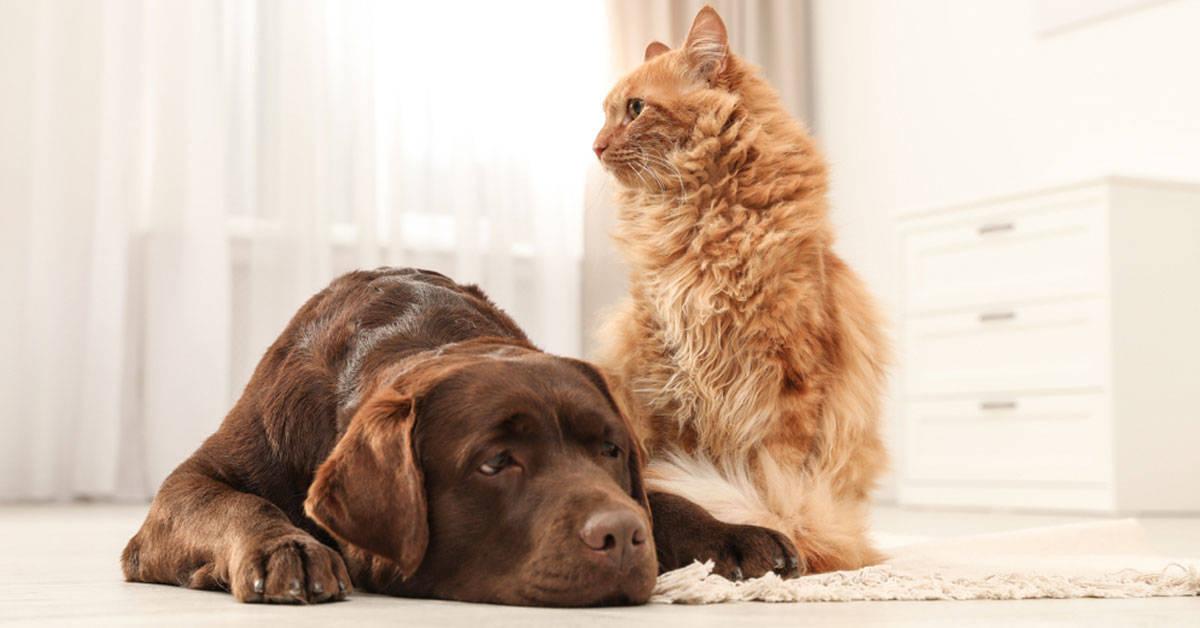 Perro o gato: descubre cuál es mejor para convivir contigo