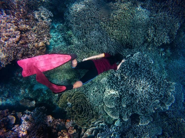 arrecife de corales